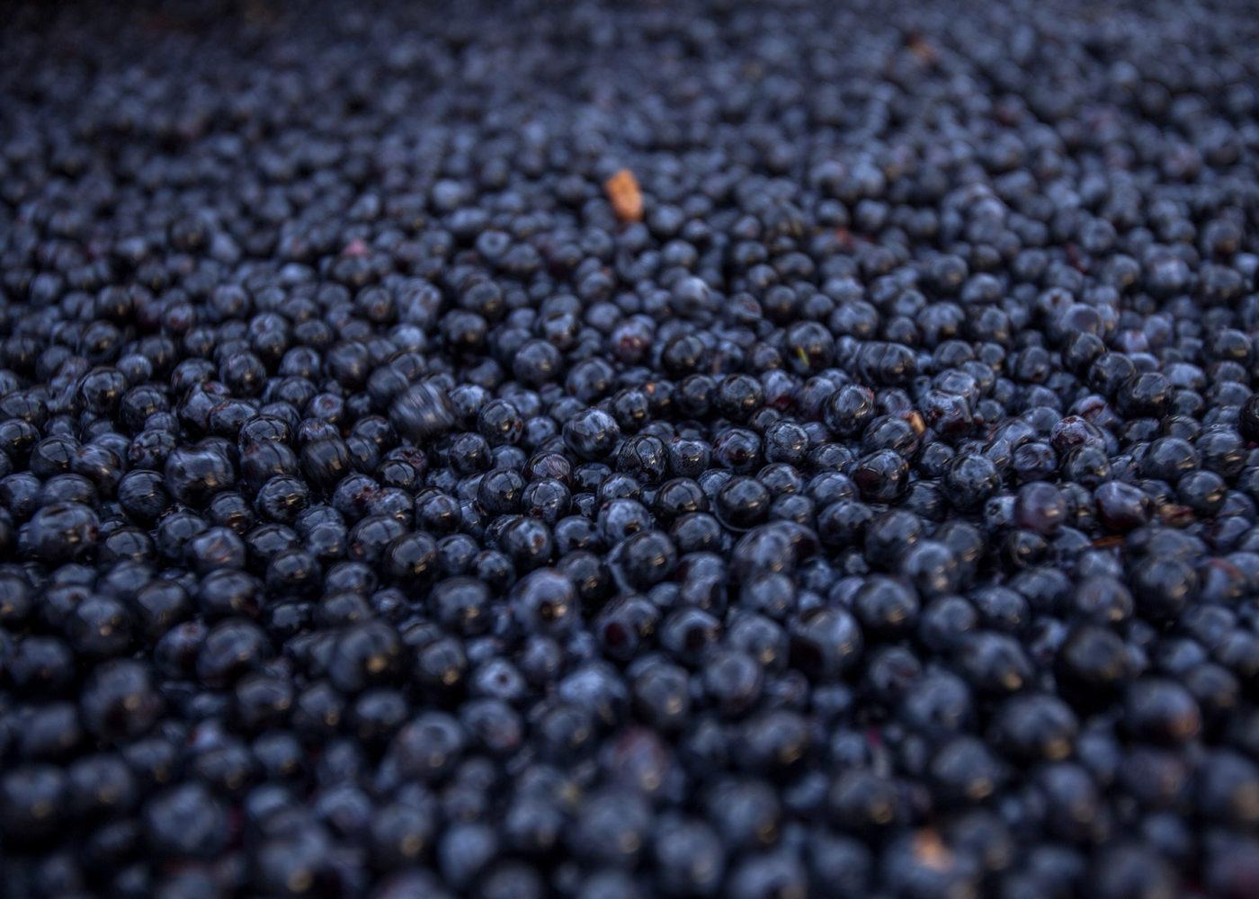 Domaines Martin raisins vendanges